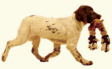 Letchworth Dog Training Club